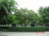 IBM公司1